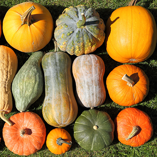 Grouping of autumn pumpkins, gourds, and squashes