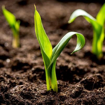 Bright green plants emerging from dark, fertile soil as young shoots